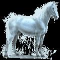 caballo de agua lluvia