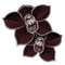 orchidee-noire.png